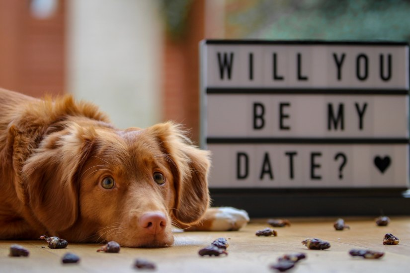 Creative Date Ideas for Cheap or For Free!