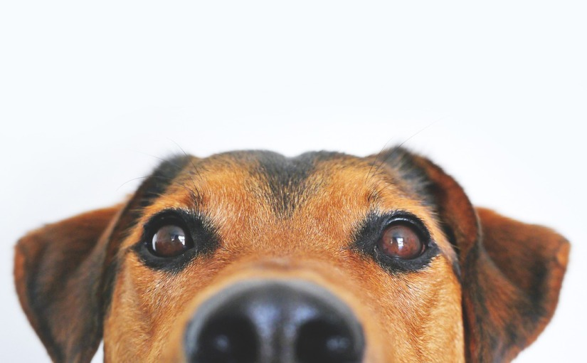 Study Shows Dog Owners Live Longer, HealthierLives