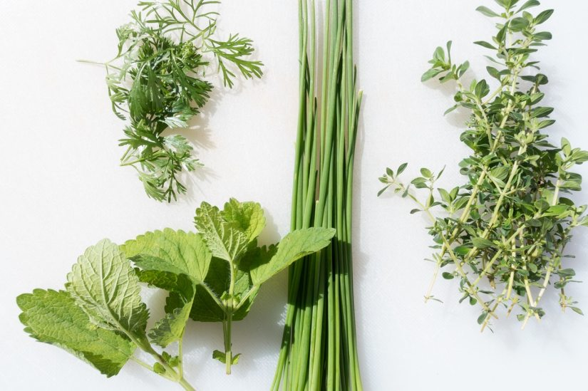 5 Herbs You Can Grow Indoors