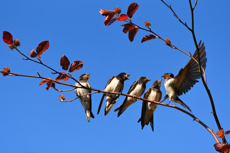 swallow-3584915_1920